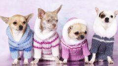 El Örgüsü Köpek Kazak Modelleri